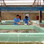 Ninh Thuận xây dựng trung tâm sản xuất tôm giống chất lượng cao